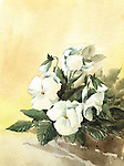 Painting of beautiful white pansy
