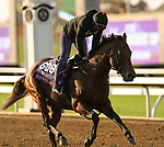 November 1, 2020: Four Wheel Drive, trained by trainer Wesley A. Ward, exercises in preparation for the Breeders' Cup Turf Sprint at Keeneland Racetrack in Lexington, Kentucky on November 1, 2020. Carolyn Simancik/Eclipse Sportswire/Breeders Cup