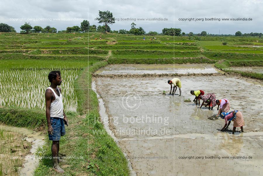 INDIA Westbengal, village Gandhiji Songha , SRI system of rice intensification, paddy cultivation, replanting of rice seedlings in accurate distance / INDIEN Westbengalen , Dorf Gandhiji Songha , Landwirtschaft, Anpassung an den Klimawandel, Verbesserung des Anbau durch SRI System zur Intensivierung des Reisanbau