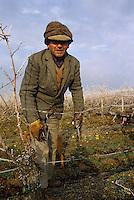 """Europe/France/Centre/Indre-et-Loire/Vallée de la Loire/Chinon : AOC Chinon - Taille des vignes et brulage des sarments au """"Clos de la Diligence"""""""
