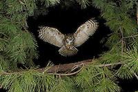 New Jersey - Owls