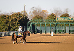 Tiz The Law, trained by Barclay Tagg, exercises in preparation for the Breeders' Cup Classic at Keeneland 11.03.20.