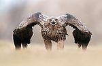 Bird has attitude with photographer Robert Kreinz