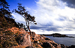 Shark Reef Park is a spectacular park along the west side of Lopez Island in Washington State's San Juan Islands group.