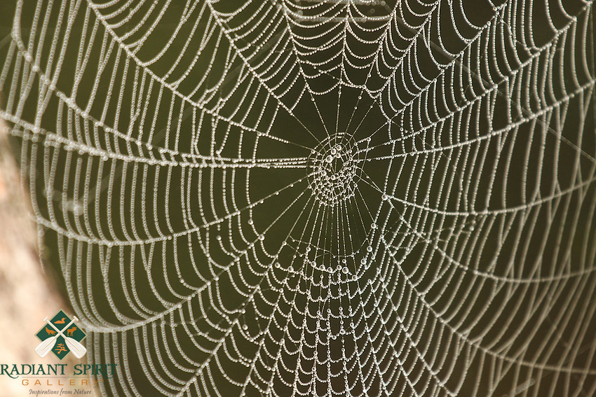 """""""Dewy Spider Web""""<br /> <br /> On foggy mornings, the collected dew reveals thousands of forest spider webs.<br /> ~ Day 138 of Inspired by Wilderness: A Four Season Solo Canoe Journey"""