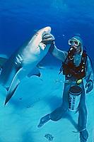 Caribbean reef shark, Carcharhinus perezii and scuba diver in steel chain mail mesh suit, Bahamas, Atlantic Ocean