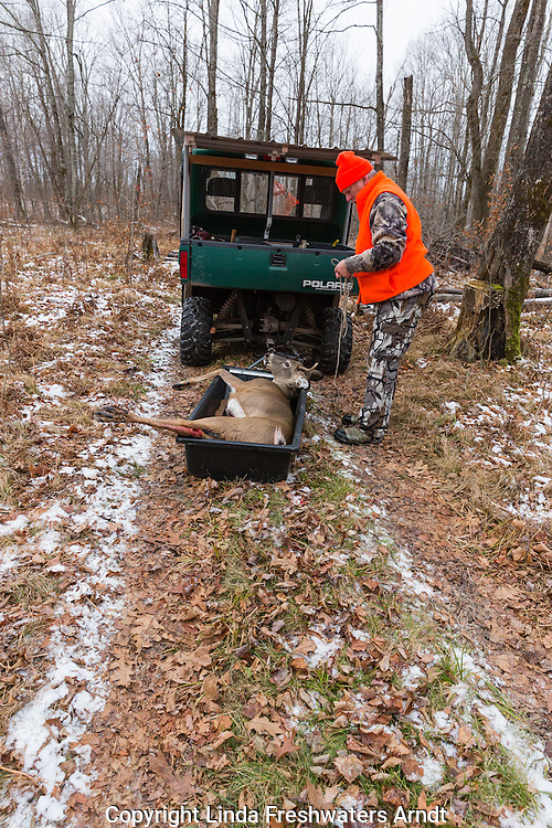 Field dressed white-tailed buck in a transport sled