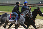 Turralure , trained by Charles Lopresti and to be ridden by Julien Leparoux , exercises in preparation for the 2011 Breeders' Cup at Churchill Downs on November 4, 2011.