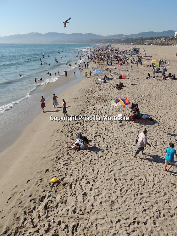Santa Monica, California - September 23, 2012:  A bird soars above the beach.