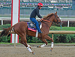 October 31, 2018 : Promises Fulfilled, trained by Dale Romans, gallops in preparation for the Breeders' Cup Sprint at Churchill Downs on October 31, 2018 in Louisville, KY. Jessica Morgan/ESW/CSM