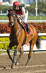 20 March 2010:  Rahy's Attorney after the Appleton Stakes at Gulfstream Park in Hallandale Beach, FL.
