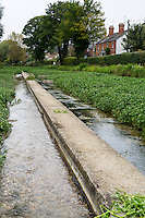 UK, England, Ewelme.  Watercress Beds and Ewelme Brook.