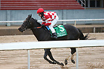 March 14, 2020: Serengeti Empress (5) with jockey Joseph Talamo aboard before crossing the finish line in the Azeri Stakes at Oaklawn Racing Casino Resort in Hot Springs, Arkansas on March 14, 2020. Justin Manning/Eclipse Sportswire/CSM