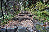 Kilauea Iki trail in Hawai'i Volcanoes National Park, Big Island.