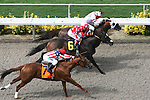 July 30 2010: Within Reason and Martin Pedroza(rail) win the 4th race at Del Mar Race Track in Del Mar CA.