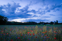 Flowers field at dusk