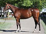 Hip #128 A.P. Indy - Moonlight Sonata filly at the  Keeneland September Yearling Sale.  September 9, 2012.