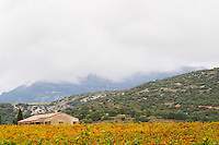 Montpeyroux. Languedoc. France. Europe. Vineyard. Mountains in the background.
