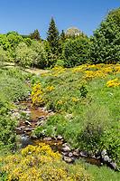 France, Ardèche (07), parc naturel régional des Monts d'Ardèche, Massif du Mézenc, le Mont Gerbier-de-Jonc  (1551 m), source de la Loire