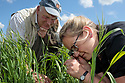Arable weed workshop, helping local farmers identify key species and manage arable sites in an appropraite manner to promote their growth. Back from the Brink 'Colour in the Margins' project. Somerset, UK. June.