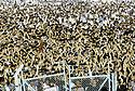 Irak 1991    Meeting de Jalal Talabani au stade d'Erbil    Iraq 1991   Jalal Talabani's meeting in Erbil stadium