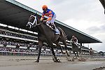 Uncle Mo (no. 3), ridden by John Velasquez and trained by Todd Pletcher, wins the  31st running of the grade 2 Kelso Handicap for three year olds and upward on October 01, 2011 at Belmont Park in Elmont, New York.  (Bob Mayberger/Eclipse Sportswire)