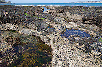 Gezeitentümpel, Rockpool, Lithotelme, Rockpools, Lithotelmen, Felsküste, Felsküsten, Küste, Meesesküste, Gezeiten, Ebbe und Flut, Niedrigwasser. Tide pools, rock pools, Tide pool, rock pool. Frankreich, Bretagne