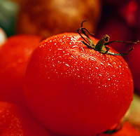 Tomato detail.