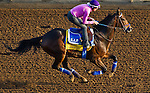 October 27, 2014:  Imperative, trained by George Papaprodromou, exercises in preparation for the Breeders' Cup Classic at Santa Anita Race Course in Arcadia, California on October 27, 2014. John Voorhees/ESW/CSM