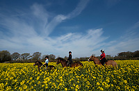 BNPS.co.uk (01202) 558833.<br /> Pic: ZacharyCulpin/BNPS<br /> <br /> Weather input <br /> <br /> Hot to trot - Horse riders make the most of the warm spring weather and gently trot through farmer's tyre tracks at a stunning yellow rape seed field (with farmers permission) near Christchurch in Dorset today (Sunday).