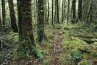 A tramping track through the beautifully green bush near Stone Hut on the Wangapeka Track - Kahurangi National Park