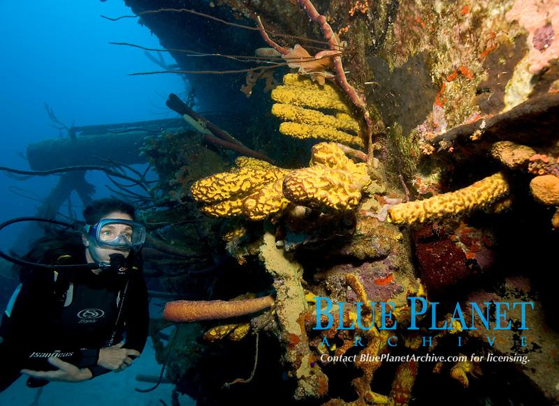 Hilma Hooker wreck, Bonaire Kathleen Harrigan, model released, , Netherland Antilles, Caribbean, Atlantic