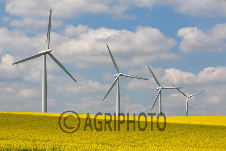 Wind Turbines in a field of oilseed rape<br /> Picture Tim Scrivener 07850 303986<br /> tim@agriphoto.com<br /> ?.covering agriculture in the UK?.