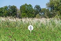 """Von Schilf überwachsenes Schild """"Durchfahrt verboten"""" in den Oder-Auen, Lebus, Oder-Neiße-Radweg, Märkisch Oderland, Brandenburg, Deutschland"""
