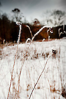 Winter sunlight through frozen field grasses