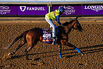 November 3, 2020: Mucho Unusual, trained by trainer Tim Yakteen, exercises in preparation for the Breeders' Cup Filly & Mare Turf at Keeneland Racetrack in Lexington, Kentucky on November 3, 2020. John Voorhees/Eclipse Sportswire/Breeders Cup/CSM
