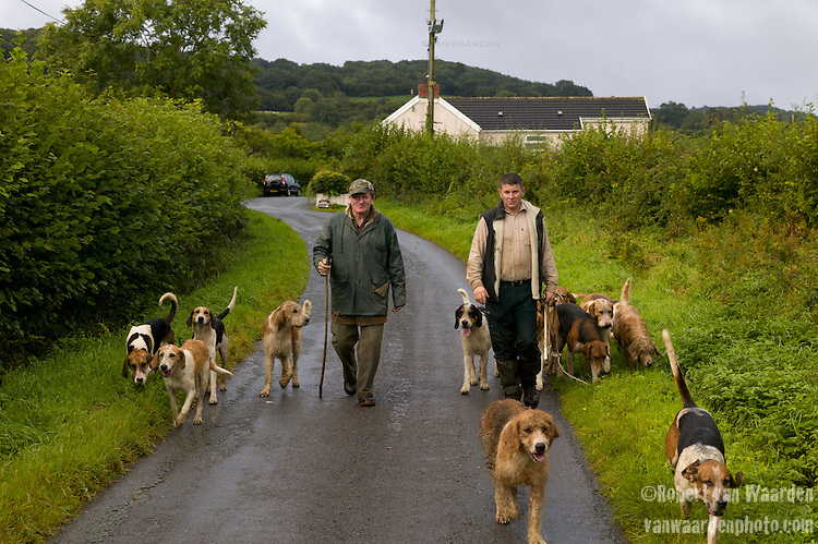 Two men walk down a country lane with a pack of happy, wet, hunting dogs in Wales, the United Kingdom.