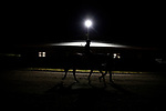 November 3, 2020: Owendale, trained by trainer Brad Cox, exercises in preparation for the Breeders' Cup Dirt Mile at  Keeneland Racetrack in Lexington, Kentucky on November 3, 2020. Alex Evers/Eclipse Sportswire/Breeders Cup