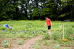 PLYMOUTH, CT-3 July 2014-070314EC12--   Nick Piper, 13, tends to his family's garden at the Plymouth Community Garden, which is along Tremco Drive. This is the first year of the garden and each plot is well taken care of. Erin Covey Republican-American