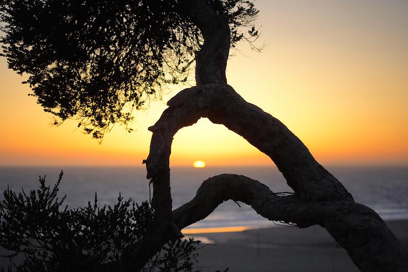 Sunset through tree branches. Santa Monica, California