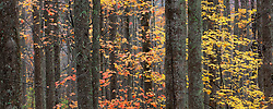 A show of fall colors deep in the forest of the Appalachian range.