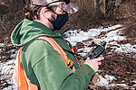 Massachusetts wildlife biologist, David Scarpitti gets GPS coordinates from where he collected New England cottontail rabbit pellets at the Sandwich game park, Sandwich, Massachusetts.
