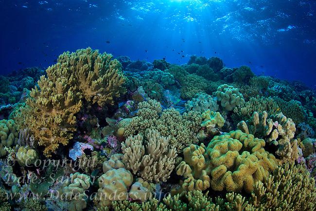 A colorful coral reef off Wakatobi, southeast Sulawesi, Indonesia.