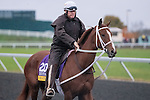 October 28, 2015:  I'm a Chatterbox, trained by J. Larry Jones and owned by Fletcher and Carolyn Gray, exercises in preparation for the Longines Breeders' Cup Distaff at Keeneland Race Track in Lexington, Kentucky on October 28, 2015.  Jon Durr/ESW/CSM