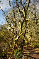Shinglemill Creek Forest, Vashon Island, Washington, US