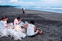 eggs of olive ridley sea turtles, Lepidochelys olivacea, are prepared and bagged for market in legal, controlled harvest during arribada, Playa Ostional, Costa Rica, Pacific Ocean
