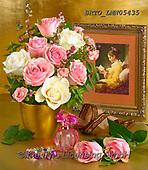 Alfredo, FLOWERS, BLUMEN, FLORES, photos+++++,BRTOLMN05435,#f#, EVERYDAY ,rose,roses