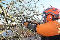 25.11.2014: Baumfällarbeiten in Trebur