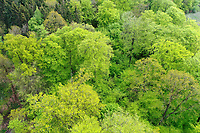 Wald von oben, Luftaufnahme, Laubwald, Mischwald, wood, forest, Deutschland, Norddeutschland, Schleswig-Holstein, Germany