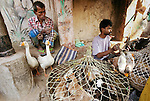 Poultry sellers, Kolkata, India